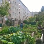Jardin Myosotis3