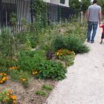 Jardin des Fauvelles 1