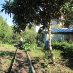 Jardin des coteaux3