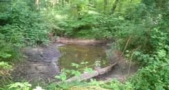 Appel à projets en faveur de la biodiversité