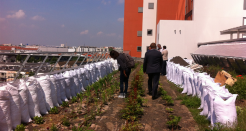 Agriculture urbaine et maraîchage sur toit