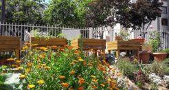 La vie dans les jardins partagés (en 2020)