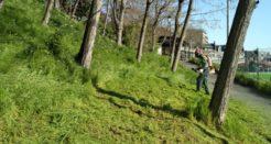 Ecologie urbaine à Saint-Cloud